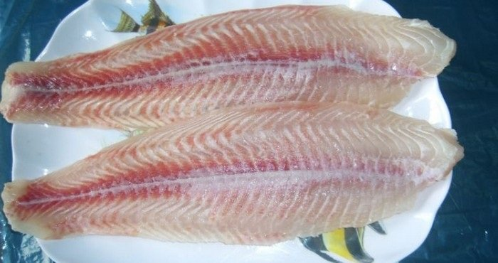 вредная рыба пангасиус