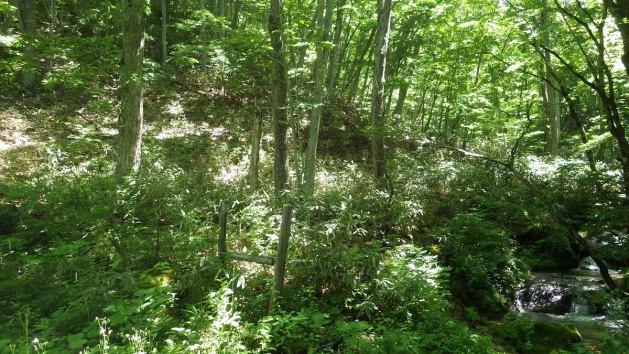 飛越源流の森づくり
