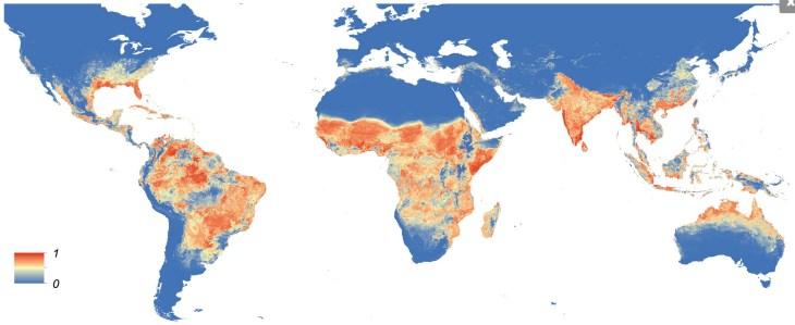 Verspreidingsgebied Aedes aegypti (bron: eLifescience.org)