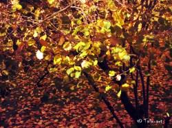 autumnleaves3x