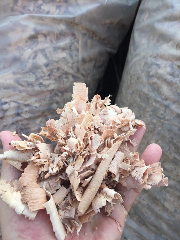 kaba kayın talaşı
