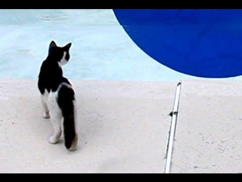Amazing Swimming Pool Illusion!