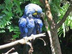 parc-des-oiseaux7