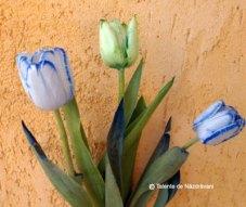 Experiment - colorarea petalelor de flori