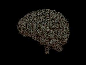 Brain2.S