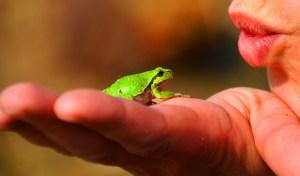 frog-prince-334970