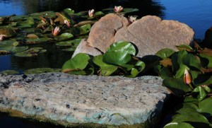 lily-pads-1435451_1920