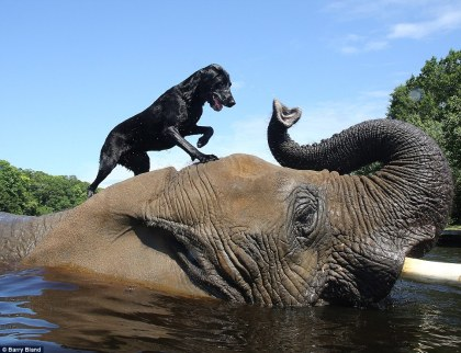 Inspiring story of Bella and Bubbles at the Myrtle Beach Safari