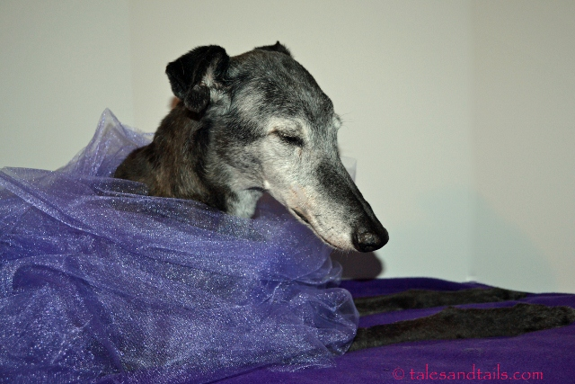 An Old Lady Wears Purple