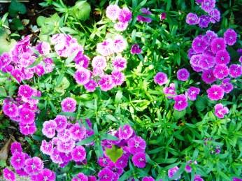 Flowers!! 019