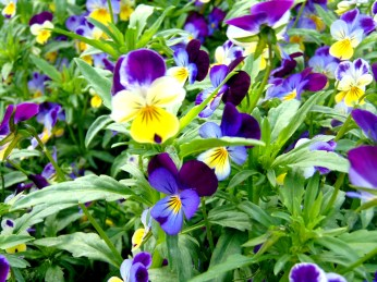 Flowers!! 078