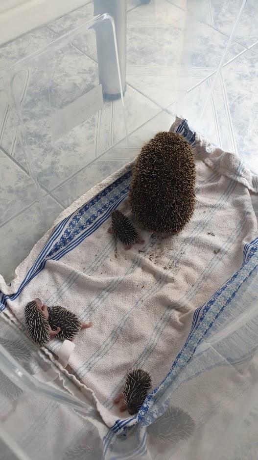 Hedgehogs Then