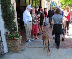 Hey--this is my neighbor walking her dog Liberty- a rescue dog