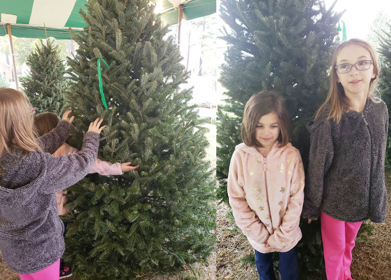 Kids picking out our Christmas tree following our Family Christmas traditions