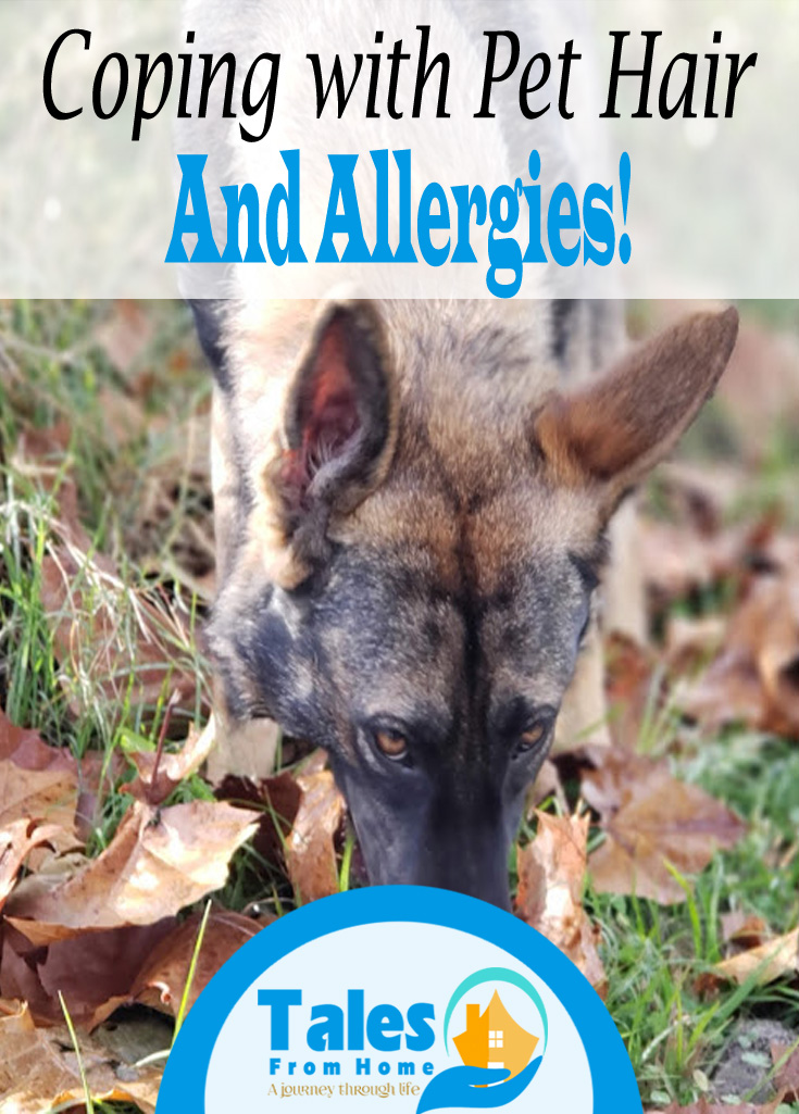 Coping with Pet Hair and Allergies #pets#dogs #cats#allergy#allergies #familypets #family #Health