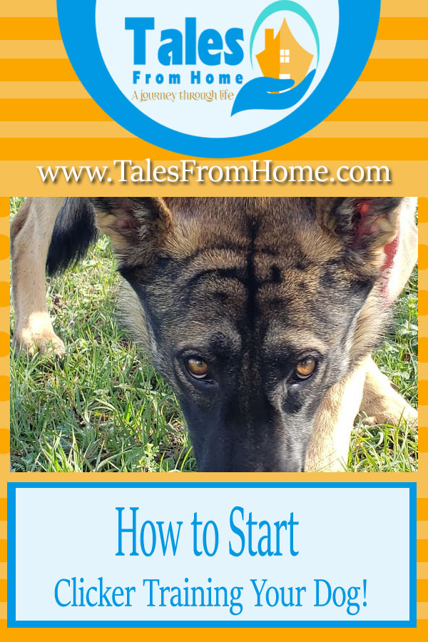 How to Start Clicker Training Your Dog #pets #pet #dog #dogtraining #clickertraining #family #familypets