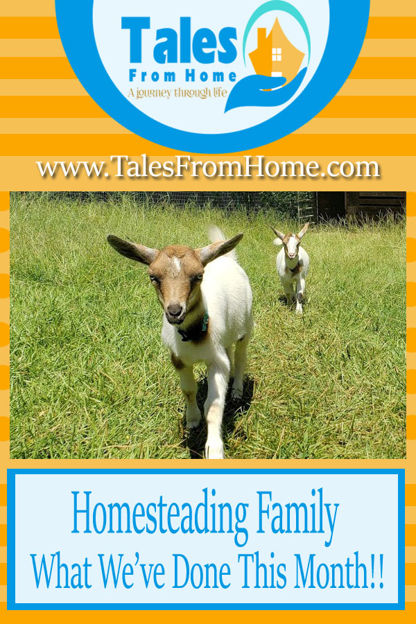 Homesteading Family, What we've done this month to get our homestead started! #homesteading #countrylife #countryliving #family #countryfamily #homesteadfamily