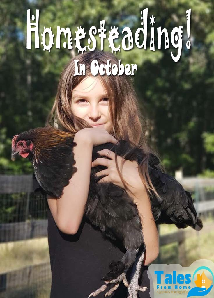 Homesteading in October. Fall around the farm is full of fun even with the colder temperatures! #Homesteading #countrylife #homesteader #kids #family #lifestyle #selfsufficient