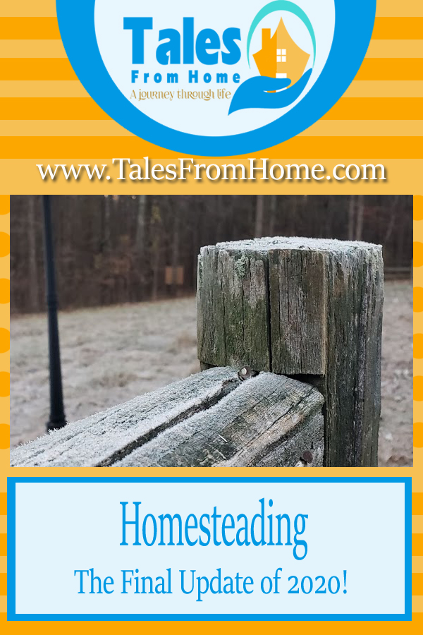 Homesteading at the end of 2020, the years final update! #homesteading #family #countryliving #countrylife #selfsufficiency #homestead #homesteadlife