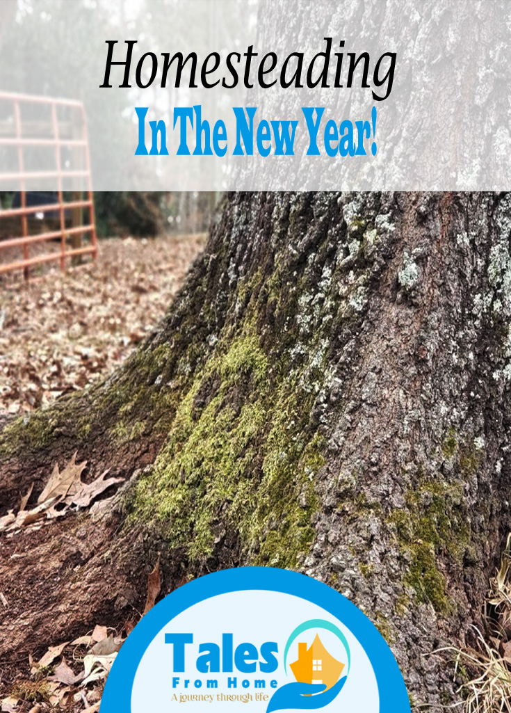 2020 was an odd one but here's how we are starting out in 2021! Join us in our homesteading adventure! #Homesteading #countryliving #selfsuficienty