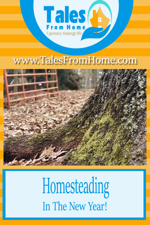 Starting off 2021! Join us on our homesteading journey! #homestead #smallfarm #animals #countryliving #countrylife #familylifestyle #blogger