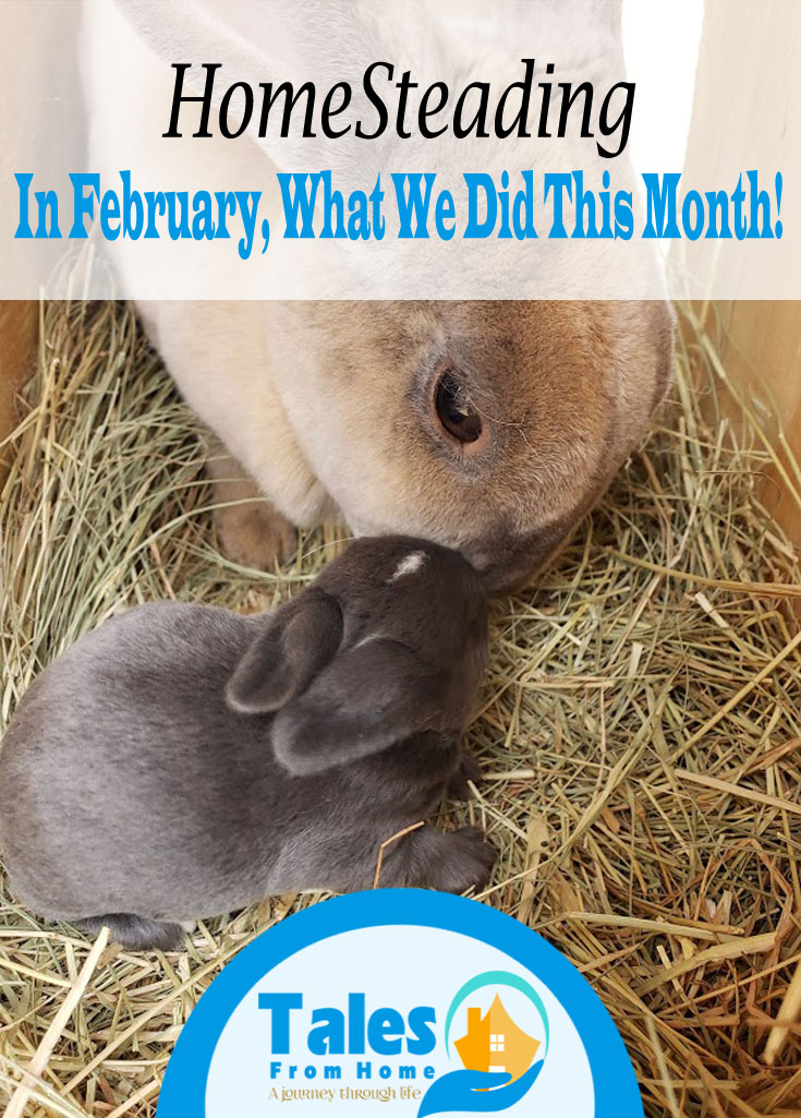 Homesteading in February! Follow along on our homesteading journey and see what we've gotten done this month! #homesteading #countrylife #homestead #homesteader #selfsufficiency #lifestyleblog #bloggerntly