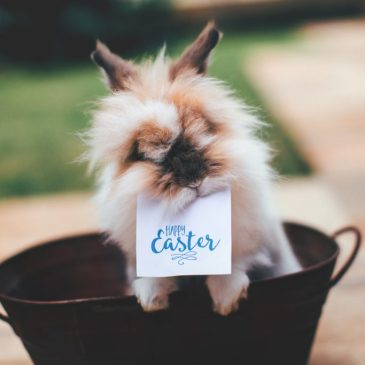 Five things to do around Albany, NY with kids this Easter