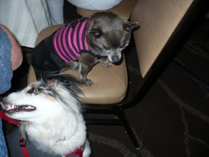 Roxy and Torrey at Blogpaws
