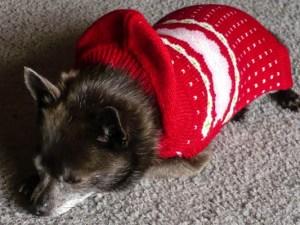 Roxy in sweater