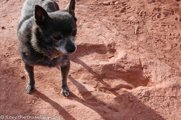 Trip to the desert, dinosaur foot prints