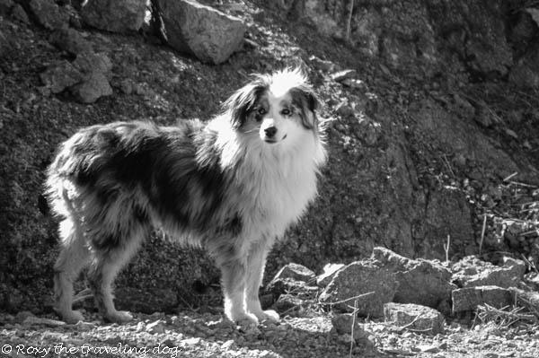 Black and White Sunday,Torrey,in the desert