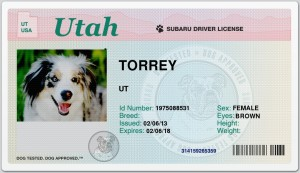 expert dog travelers, subaru drivers license
