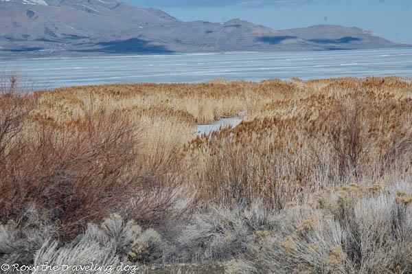 Utah lake, thursday thoughts with torrey,dogs,walking