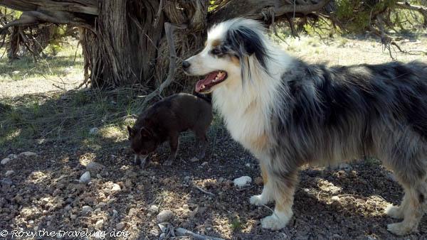 Hiking feels so good,dogs