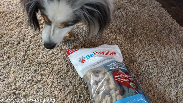 Thursday thoughts with Torrey -  BePawsitive review