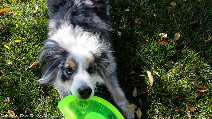 Dogobie flying disk review