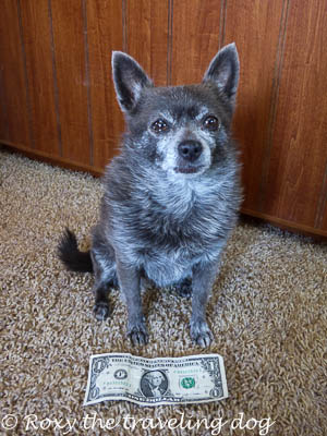 Roxy with a dollar bill