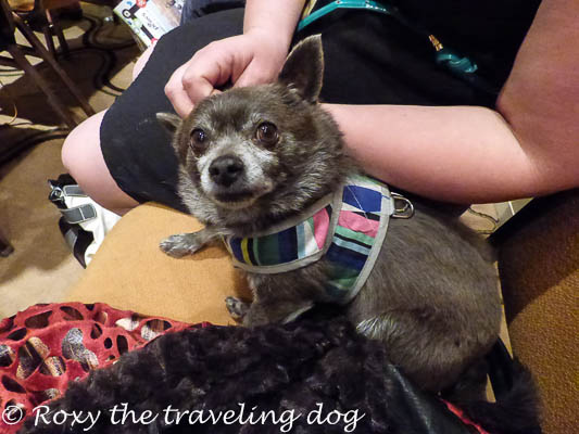 Roxy loved to snuggle with friends. Blogpaws was amazing, and she had a great time.