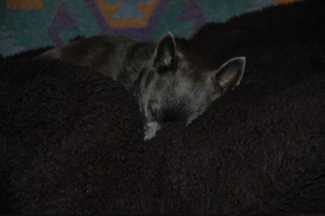Roxy snuggled and warm