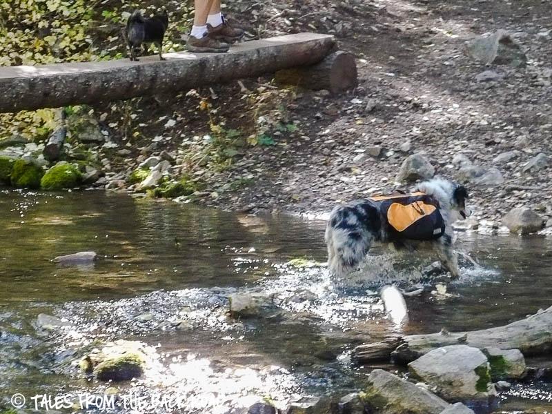 Kyjen outward hound dog backpack review
