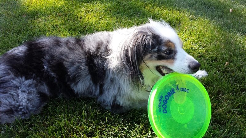dogobie dog disk. 10 Must Have Dog Products for Summer Fun