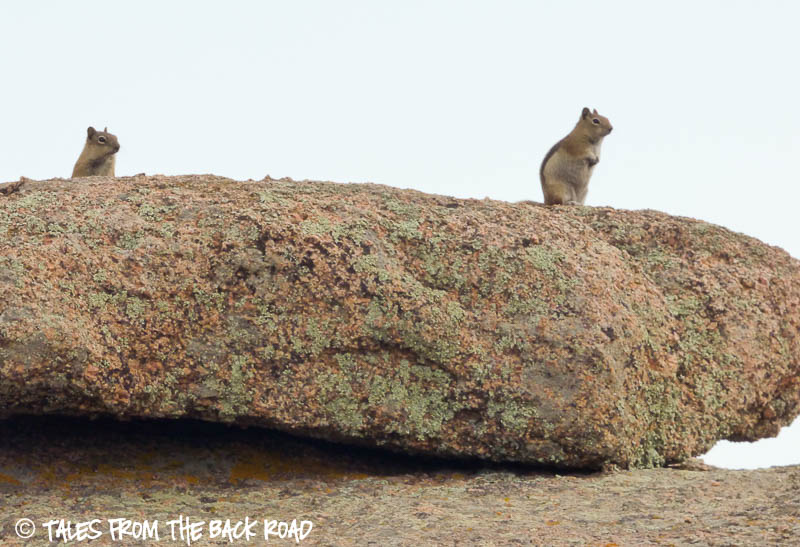 Squirrels at Vedauwoo recreation site