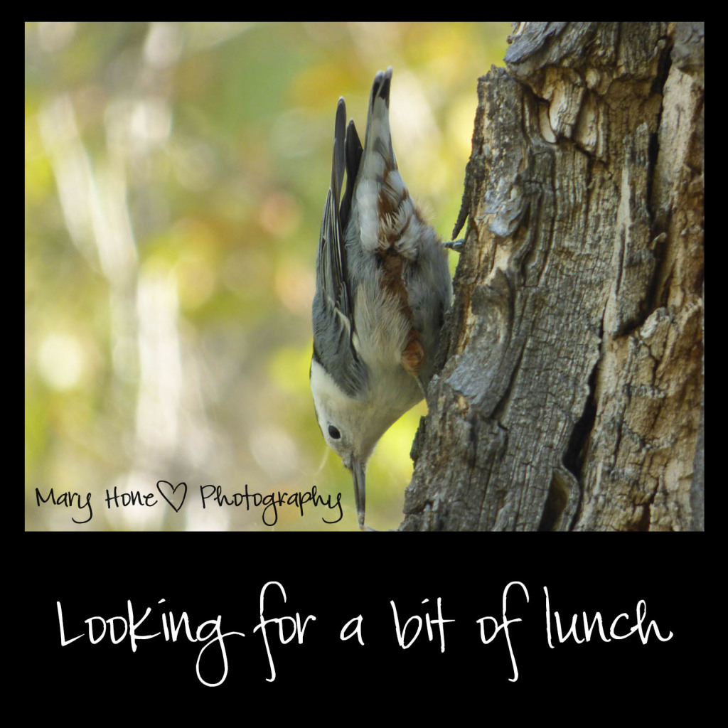 Looking for a bit of lunch