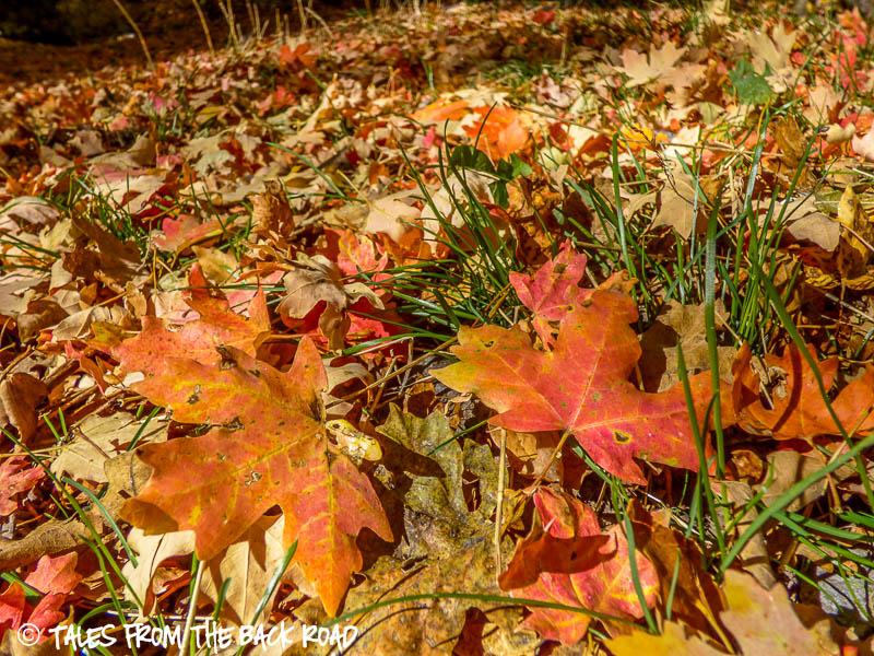 Fall, wonderful Fall