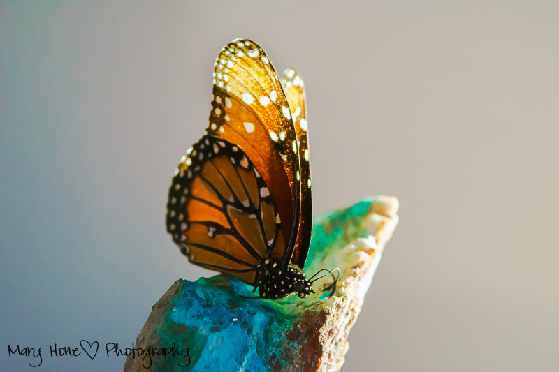 Butterfly and turquoise Mary Hone Photography