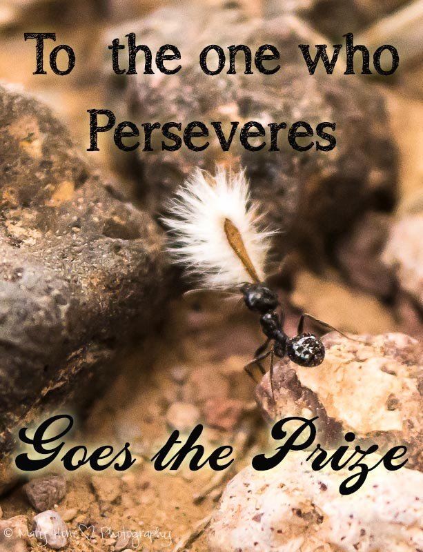 To the one who perseveres