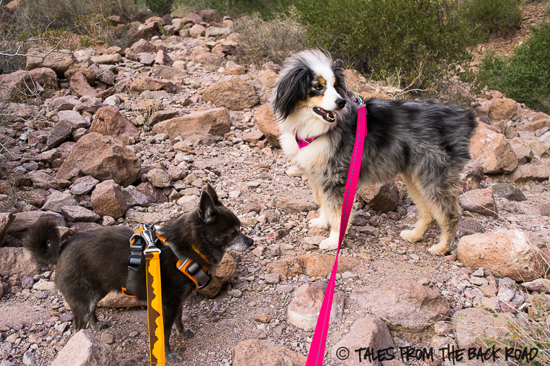 Ruffwear flat out leash. 10 Must Have Dog Products for Summer Fun