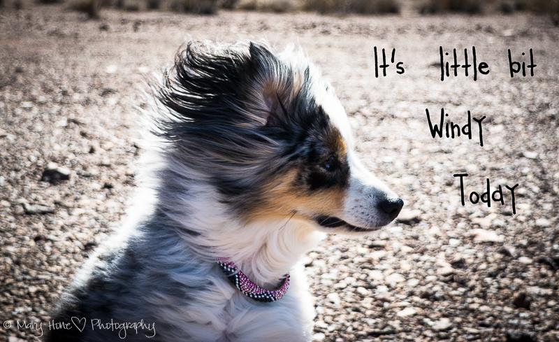 It's a little bit windy today