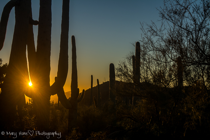 An evening in Saguaro National park