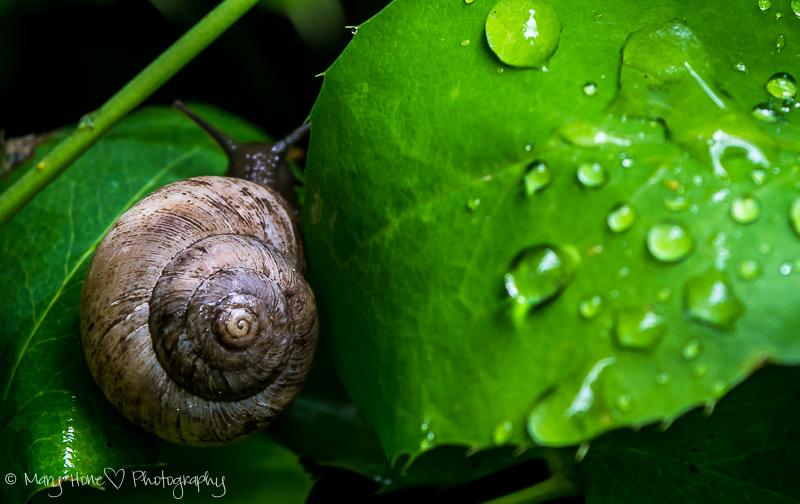 Rain loving creatures